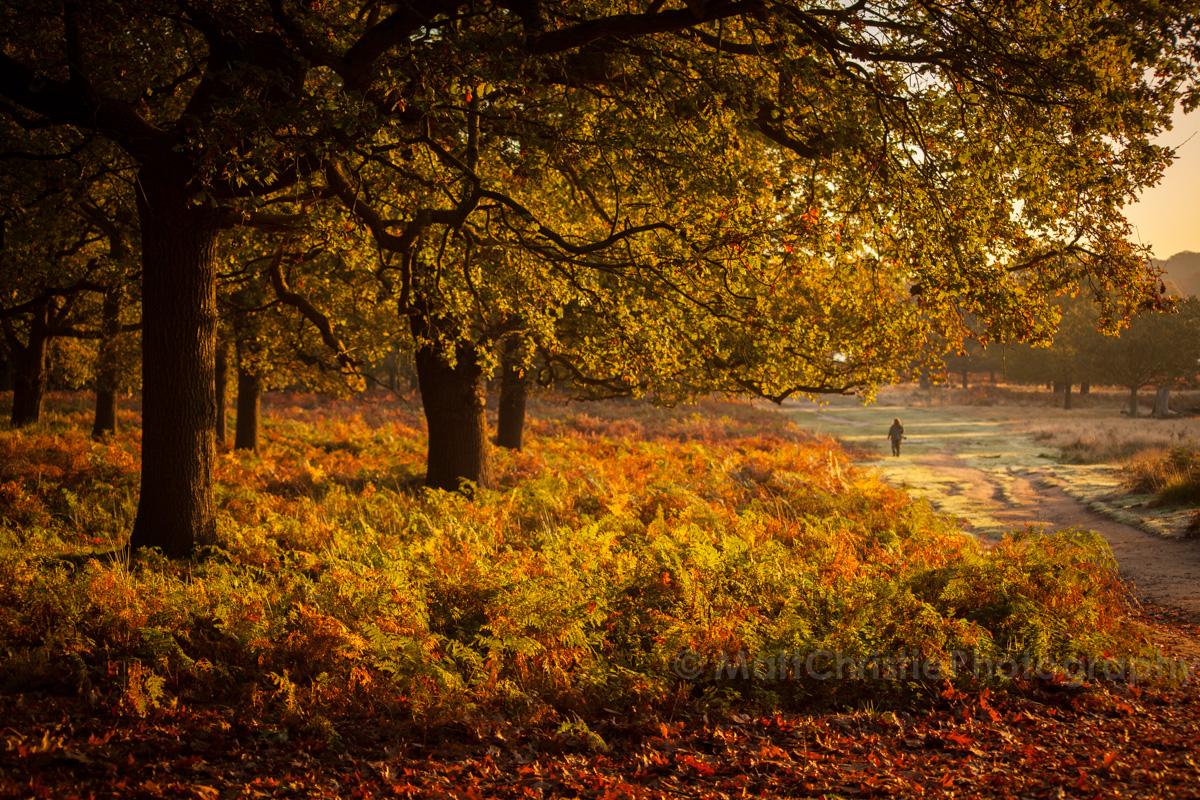 Autumn in Richmond Park